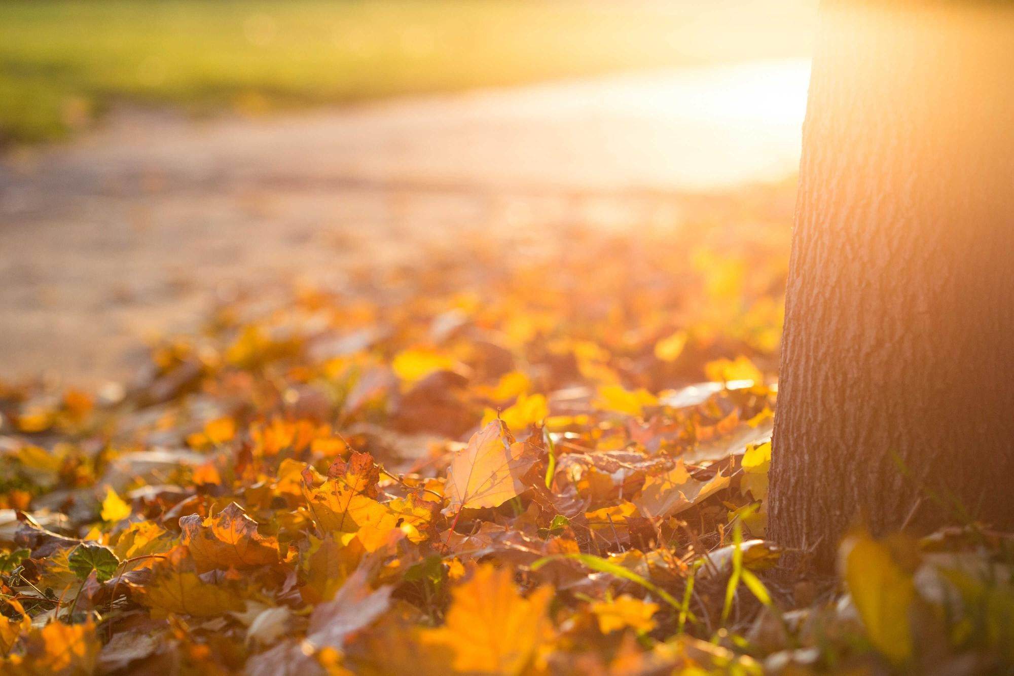 Jesenný postrek stromov